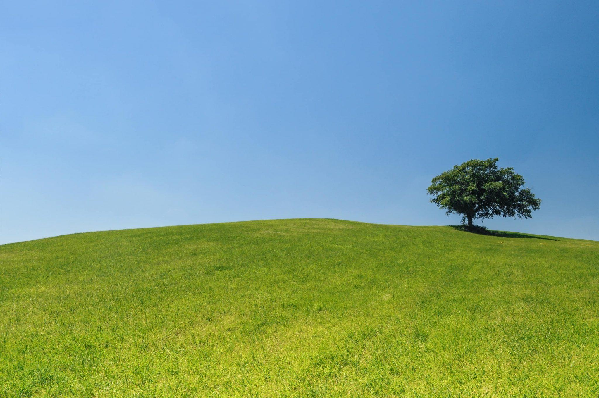 Cos'è l'EcoBio e come riconoscere i prodotti cosmetici naturali