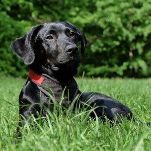 Prodotti Ecobio per animali selezione dei migliori marchi per la cura del vostro cane