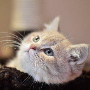 prodottti ecobio per gatti