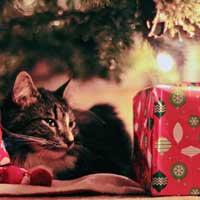 regalo ecobio per gatto