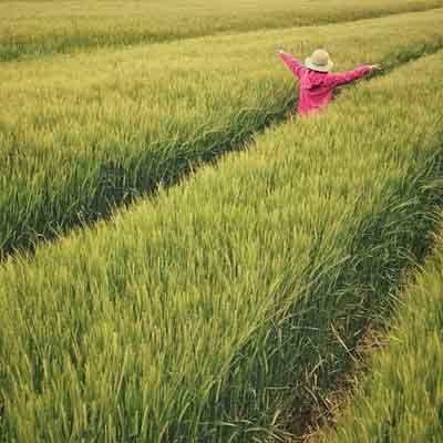 Benefici dell'acqua di riso sui capelli