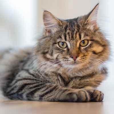 cibo ecobio naturale per gatti