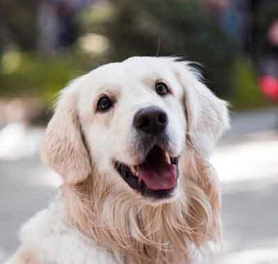 shampoo antiallergico ecobio per cani
